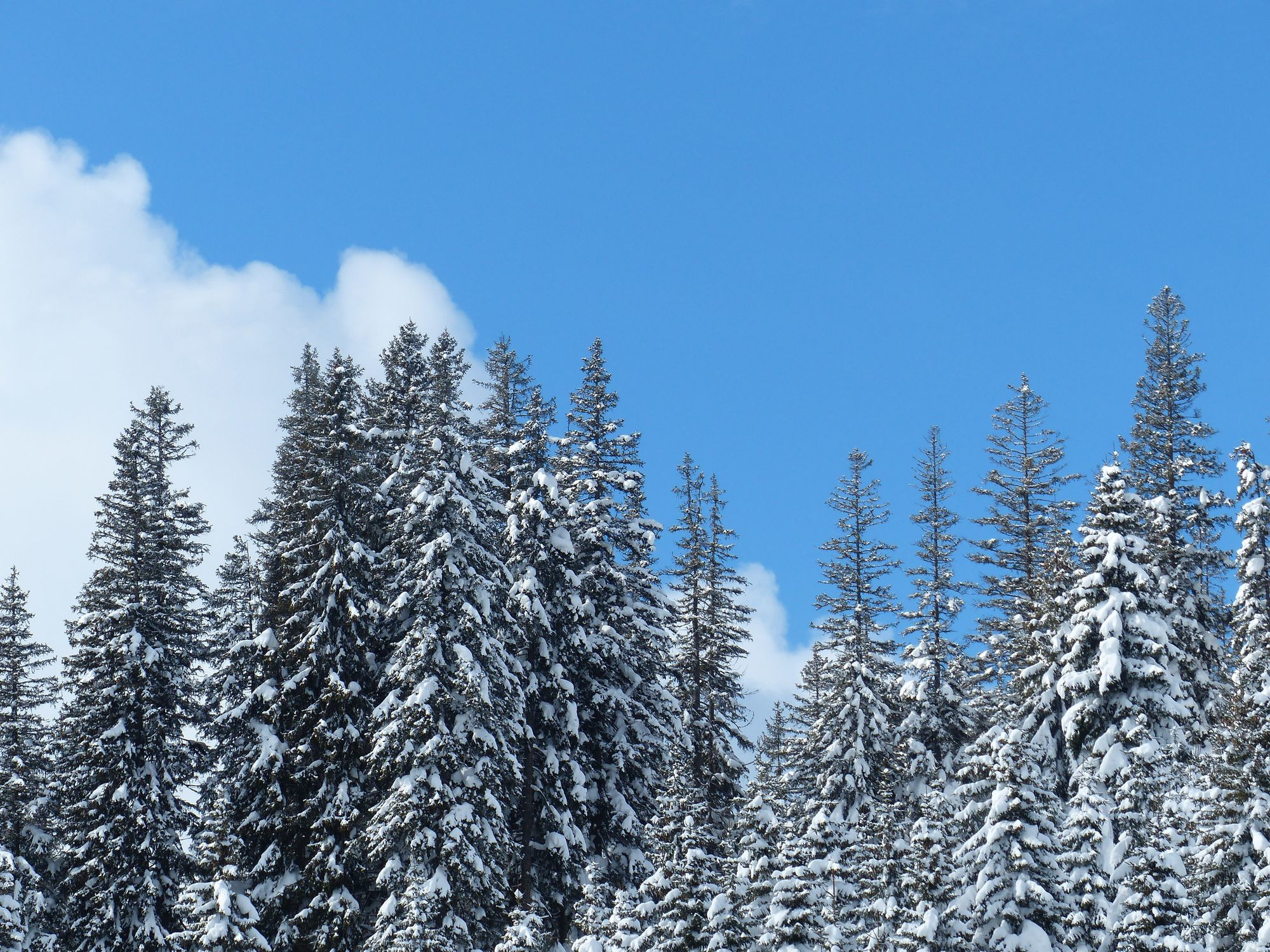 winterwald-20001500