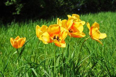 flower-3337980_1920